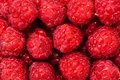 Fresh organic raspberry bio fruits from local garden farm and Royalty Free Stock Photo