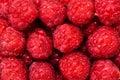 Fresh organic raspberry bio fruits from local garden farm and Royalty Free Stock Photo