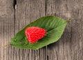 Fresh organic raspberry leaf and background Stock Photo