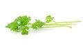 Fresh organic raw coriander leaf Royalty Free Stock Photos