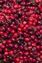 Fresh organic red cherries on display Royalty Free Stock Photo