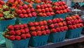 Fresh, organic red strawberries Royalty Free Stock Photo