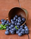 Fresh organic ripe blueberries in a wooden bowl Stock Images