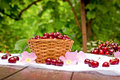 Fresh organic sour cherries in wicker basket and cherries in plate Royalty Free Stock Photo
