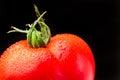 Fresh organic tomato Royalty Free Stock Photo