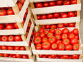 Fresh organic tomato in crates Royalty Free Stock Image