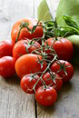 Fresh organic tomatoes on a wooden table Stock Photography