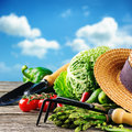 Fresh organic vegetables and garden tools in outdoor setting Royalty Free Stock Images