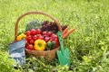 Fresh organic vegetables outdoor Royalty Free Stock Photo