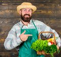 Fresh organic vegetables in wicker basket. Man bearded farmer wear apron presenting vegetables wooden background. Farmer Royalty Free Stock Photo