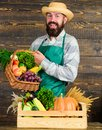 Fresh organic vegetables in wicker basket and wooden box. Farmer straw hat presenting fresh vegetables. Farmer with Royalty Free Stock Photo