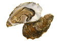 Fresh Oyster Royalty Free Stock Photos