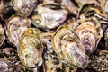 Fresh Oysters In Bulk At The F...