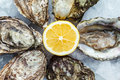 Fresh oysters on ice with lemon Royalty Free Stock Photo