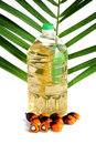 Fresh Palm Oil seeds and cooking oil with leaf Stock Photo