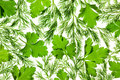 Fresh Parsley and Dill / close-up background Stock Photo