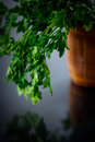 Fresh parsley sprig of on a black background Royalty Free Stock Photos