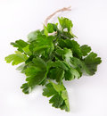 Fresh parsley on white background Royalty Free Stock Photo