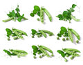 Fresh pea with green leaf isolated on white background collection Royalty Free Stock Image