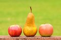Fresh pear and apple after harvest Royalty Free Stock Photo