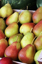Fresh pears with red and yellow skin fruits on the market place Royalty Free Stock Image