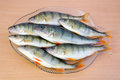 Fresh perch fishes on a kitchen platter board Royalty Free Stock Photo