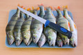 Fresh perch fishes ready for cleaning on a kitchen board Stock Photography