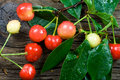 Fresh-picked Cherries Stock Photography