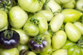 Fresh picked green tomatoes Royalty Free Stock Photo