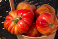 Fresh picked heirloom tomatoes straight from the garden Stock Photos