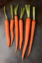 Fresh picked organic carrots on a metal cooking sheet the leafy tops of the have been cut off vertical format Royalty Free Stock Photo