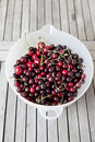 Fresh picked organic cherries. Royalty Free Stock Photo