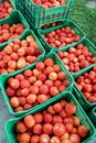Fresh picked tomatoes from organic and domestic breeding ready for sale Royalty Free Stock Photo