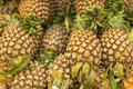 Fresh pineapple pile of tropical fruit Royalty Free Stock Photos