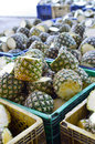 Fresh Pineapples from farm Royalty Free Stock Photo