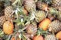 Fresh pineapples at an outdoor market Stock Photos