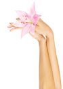 Fresh pink lily  in female hands Royalty Free Stock Photo