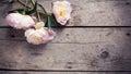 Fresh Pink Peonies Flowers On ...