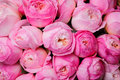 Fresh pink peony flower texture background close up Stock Photography