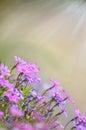 Fresh, Pink, Soft Spring Bloss...