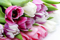 Fresh pink tulips Royalty Free Stock Photos