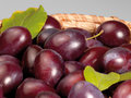 Fresh plums a basket with in grey back Royalty Free Stock Photography