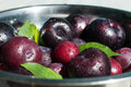 Fresh plums close up of wet in the bowl selective focus Stock Photos