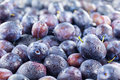 Fresh plums full frame image of a large group of Royalty Free Stock Photo