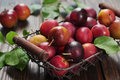 Fresh plums in metal basket on wooden background closeup Stock Photography