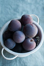 Fresh plums white colander of freshly picked from the farm Stock Image