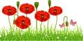 Fresh Poppy lawn