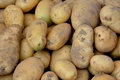 Fresh potato vegetable with yellow color shown as featured color and shape raw and fruit and nutrition Royalty Free Stock Image