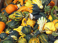 Fresh Pumpkins, Gourds and Squash Royalty Free Stock Image