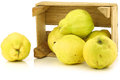 Fresh quince fruits  Cydonia oblonga Royalty Free Stock Photos